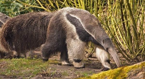 Животные-саванны-Описания-названия-и-особенности-животных-саванны-65