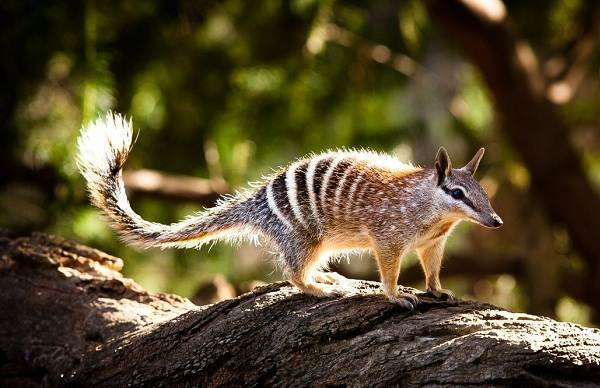 Животные-саванны-Описания-названия-и-особенности-животных-саванны-67