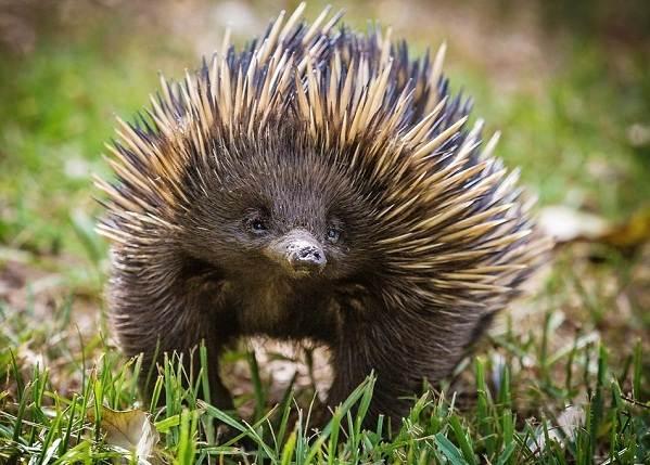 Животные-саванны-Описания-названия-и-особенности-животных-саванны-69