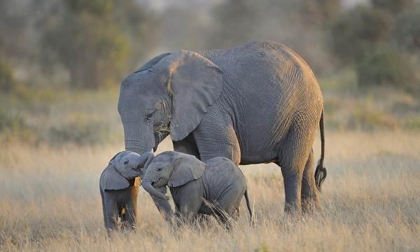 Животные-саванны-Описания-названия-и-особенности-животных-саванны-7