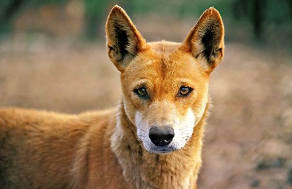 Животные-саванны-Описания-названия-и-особенности-животных-саванны-73