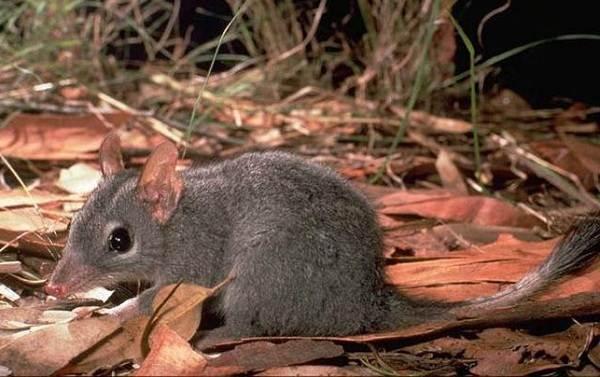 Животные-саванны-Описания-названия-и-особенности-животных-саванны-74
