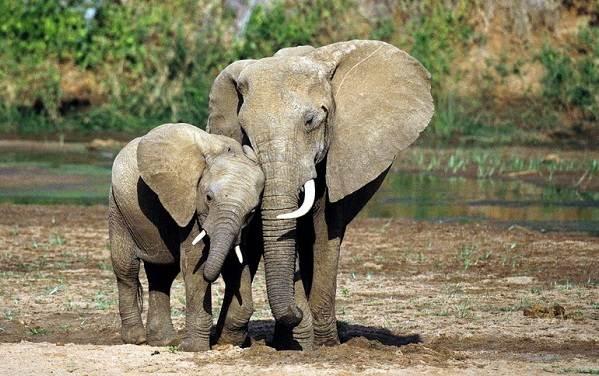 Животные-саванны-Описания-названия-и-особенности-животных-саванны-8