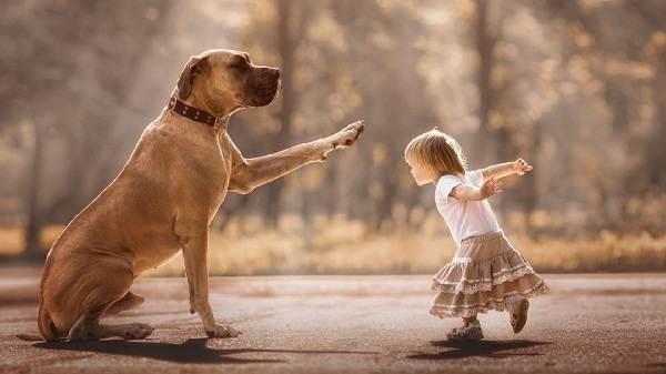 Крупные-породы-собак-Описания-названия-и-фото-собак-крупных-пород-32