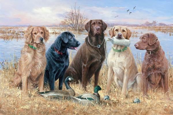 Крупные-породы-собак-Описания-названия-и-фото-собак-крупных-пород-36