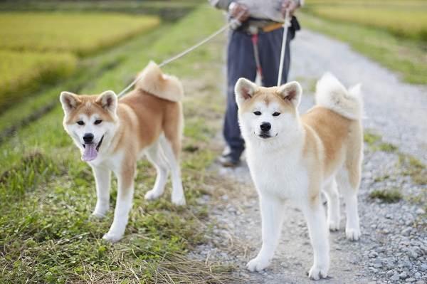 Крупные-породы-собак-Описания-названия-и-фото-собак-крупных-пород-41