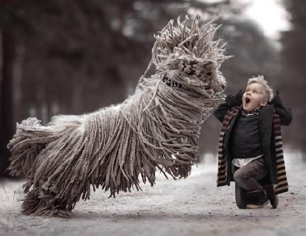 Крупные-породы-собак-Описания-названия-и-фото-собак-крупных-пород-59