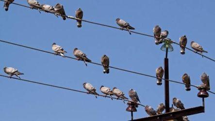 Почему птиц не бьет током на проводах?