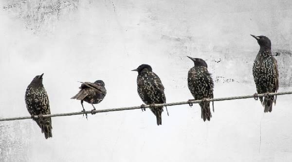 Почему-птиц-не-бьет-током-на-проводах-2