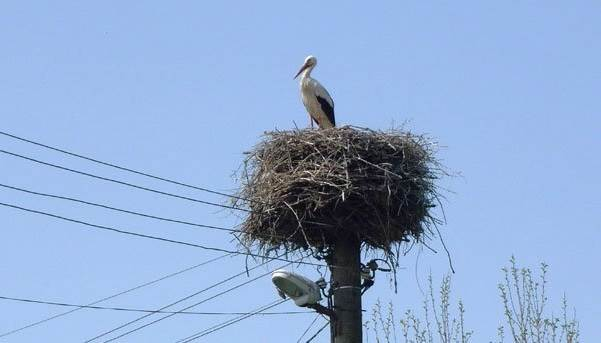 Почему-птиц-не-бьет-током-на-проводах-3