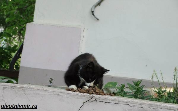 Помощь животным