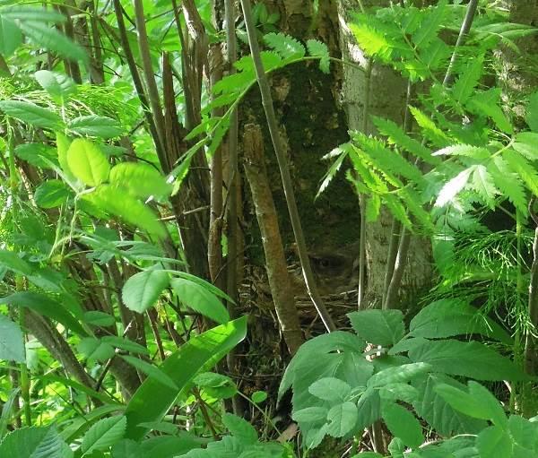Черный-дрозд-птица-Описание-особенности-питание-и-размножение-черного-дрозда-3