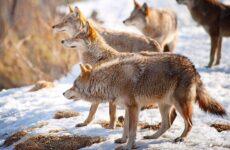 Гомойотермные животные. Виды, названия и описание гомойотермных животных
