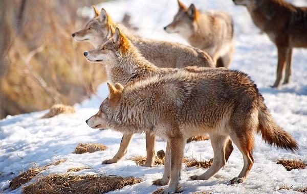 Гомойотермные-животные-Виды-названия-и-описание-гомойотермных-животных-1