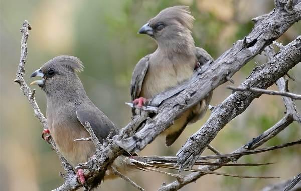 Гомойотермные-животные-Виды-названия-и-описание-гомойотермных-животных-10