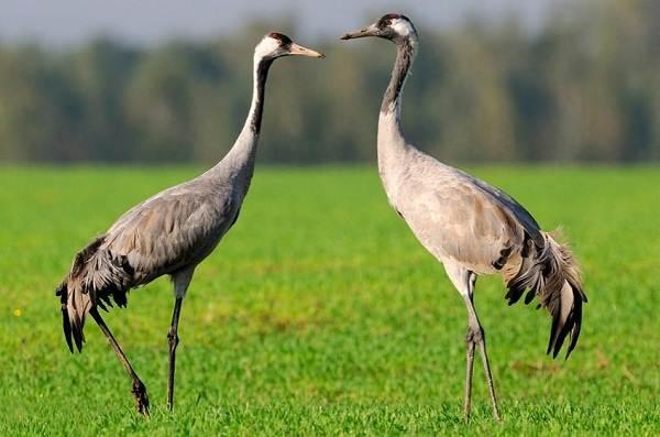 Гомойотермные-животные-Виды-названия-и-описание-гомойотермных-животных-17