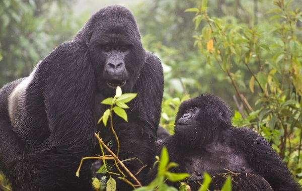 Гомойотермные-животные-Виды-названия-и-описание-гомойотермных-животных-23