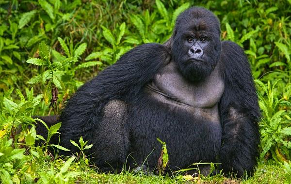 Гомойотермные-животные-Виды-названия-и-описание-гомойотермных-животных-24