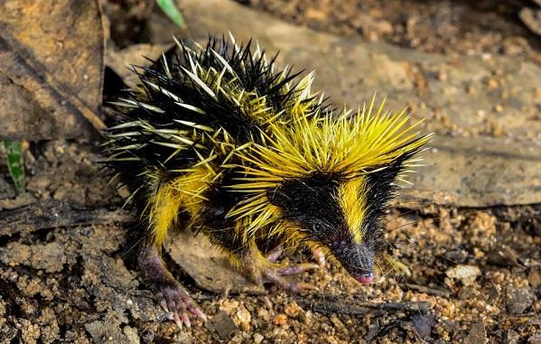 Гомойотермные-животные-Виды-названия-и-описание-гомойотермных-животных-25