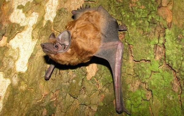 Гомойотермные-животные-Виды-названия-и-описание-гомойотермных-животных-27