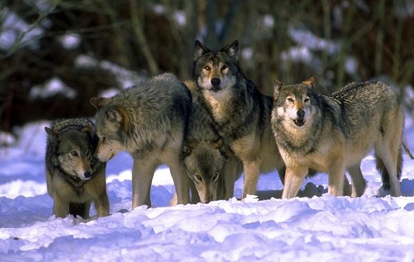 Гомойотермные-животные-Виды-названия-и-описание-гомойотермных-животных-28