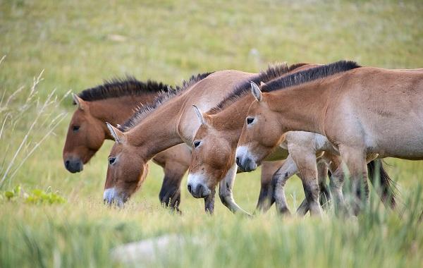 Гомойотермные-животные-Виды-названия-и-описание-гомойотермных-животных-35