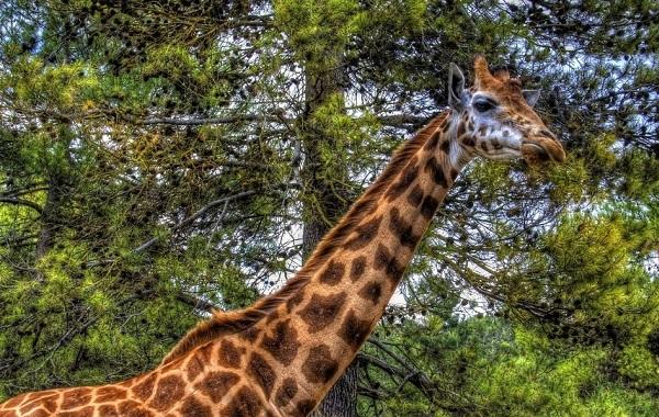 Гомойотермные-животные-Виды-названия-и-описание-гомойотермных-животных-37