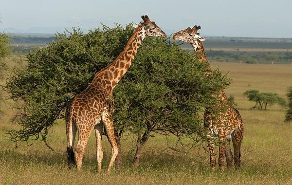 Гомойотермные-животные-Виды-названия-и-описание-гомойотермных-животных-38