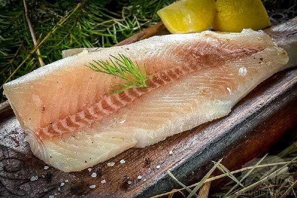 Нельма-рыба-Описание-особенности-образ-жизни-и-среда-обитания-рыбы-нельмы-2