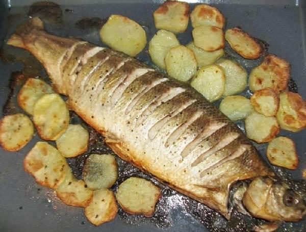 Нельма-рыба-Описание-особенности-образ-жизни-и-среда-обитания-рыбы-нельмы-4