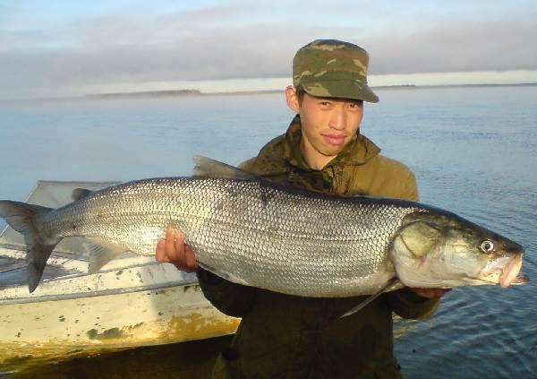 Нельма-рыба-Описание-особенности-образ-жизни-и-среда-обитания-рыбы-нельмы-6