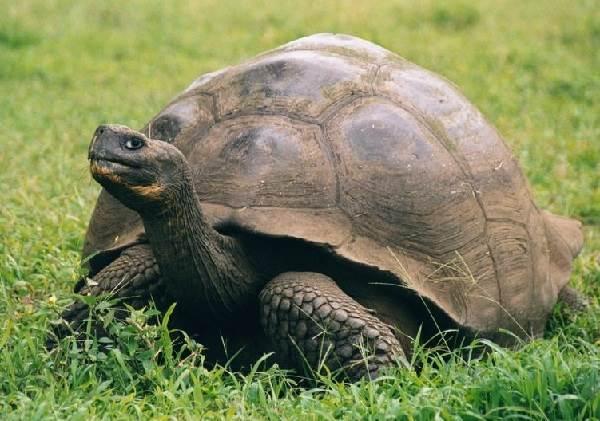 Пойкилотермные-животные-Виды-названия-и-описание-пойкилотермных-животных-1