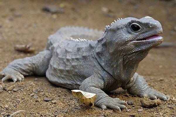 Пойкилотермные-животные-Виды-названия-и-описание-пойкилотермных-животных-7
