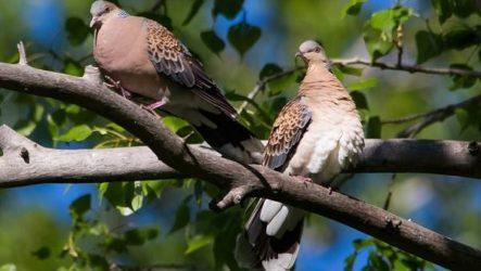 Птицы Казахстана. Описания, названия и особенности птиц Казахстана