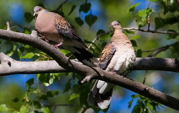 Птицы-Казахстана-Описания-названия-и-особенности-птиц-Казахстана-1