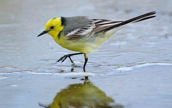 Птицы-Казахстана-Описания-названия-и-особенности-птиц-Казахстана-10