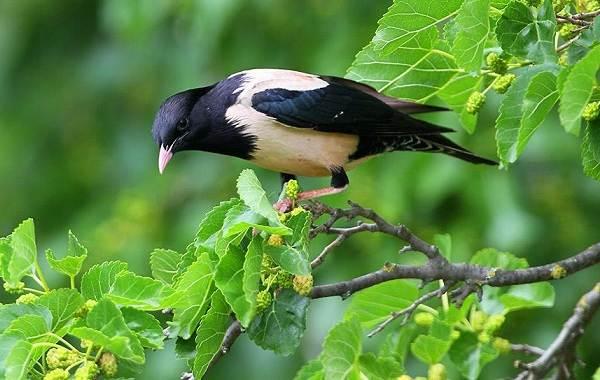 Птицы-Казахстана-Описания-названия-и-особенности-птиц-Казахстана-18