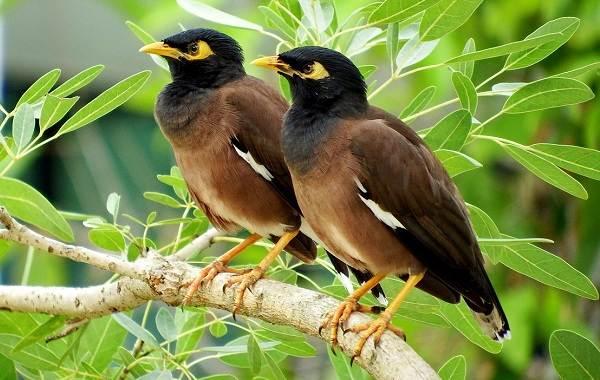 Птицы-Казахстана-Описания-названия-и-особенности-птиц-Казахстана-19