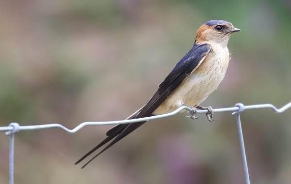 Птицы-Казахстана-Описания-названия-и-особенности-птиц-Казахстана-2