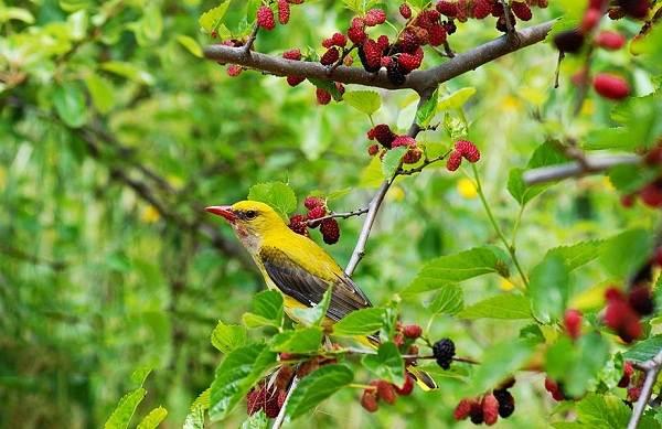 Птицы-Казахстана-Описания-названия-и-особенности-птиц-Казахстана-20