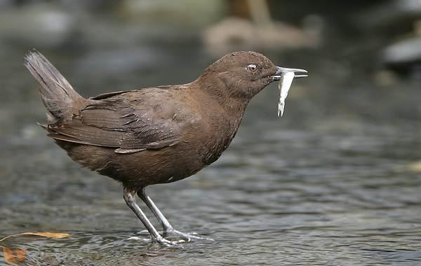 Птицы-Казахстана-Описания-названия-и-особенности-птиц-Казахстана-21