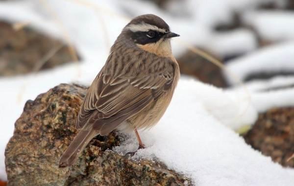 Птицы-Казахстана-Описания-названия-и-особенности-птиц-Казахстана-22