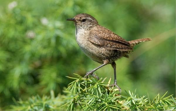 Птицы-Казахстана-Описания-названия-и-особенности-птиц-Казахстана-23