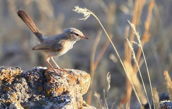Птицы-Казахстана-Описания-названия-и-особенности-птиц-Казахстана-25