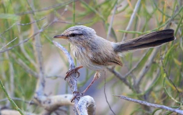 Птицы-Казахстана-Описания-названия-и-особенности-птиц-Казахстана-26