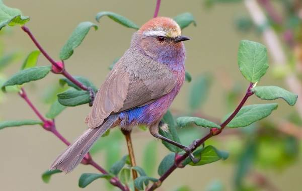 Птицы-Казахстана-Описания-названия-и-особенности-птиц-Казахстана-29