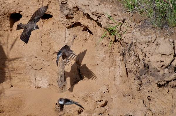 Птицы-Казахстана-Описания-названия-и-особенности-птиц-Казахстана-3