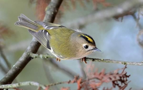 Птицы-Казахстана-Описания-названия-и-особенности-птиц-Казахстана-30