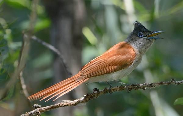 Птицы-Казахстана-Описания-названия-и-особенности-птиц-Казахстана-31