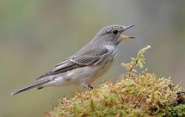 Птицы-Казахстана-Описания-названия-и-особенности-птиц-Казахстана-32